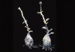 Susan Collett. Seedling Pair.
